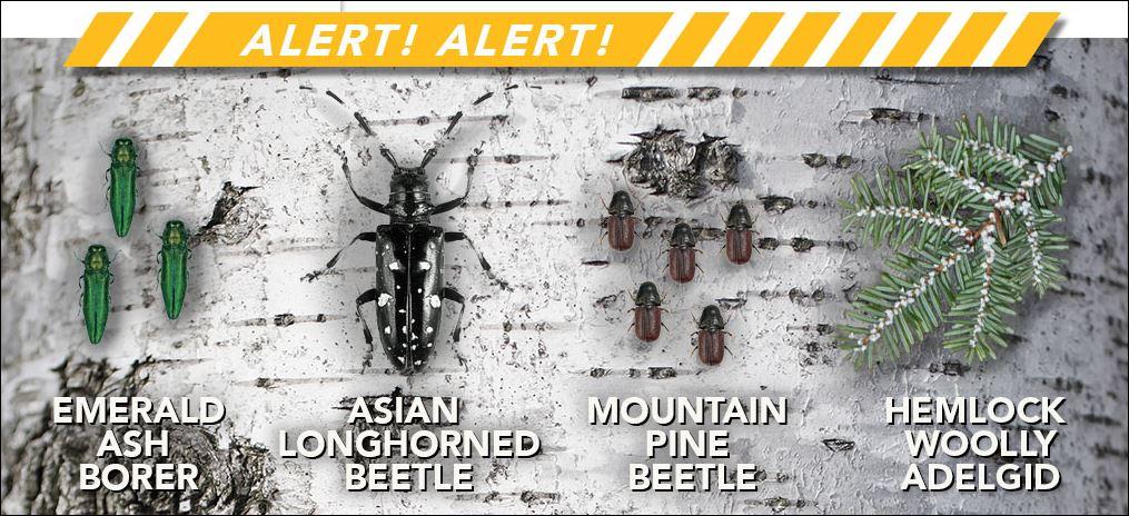 New Forest Invasives Website