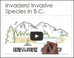 Invaders - Invasive Species in B.C.